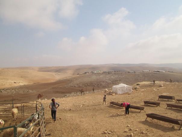 kids camels
